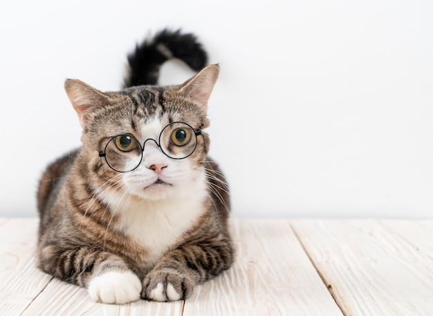 Милый серый кот в очках
