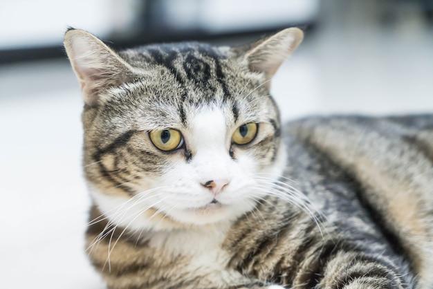 Симпатичная серая кошка