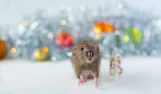 Милая серая маленькая крыса смотрит в рамку и сидит рядом с елкой с красивым светящимся серым пятном и елочными шарами