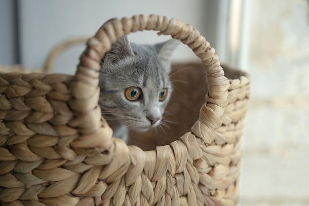 Милый серый полосатый кот в корзине дома в гостиной у окна