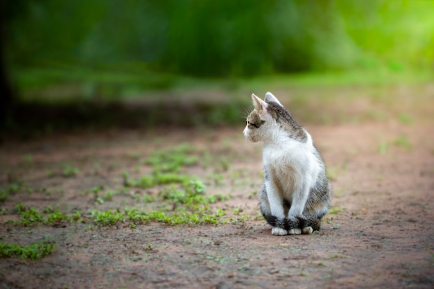 Cute grey and white cats face to the left and sit on the ground.