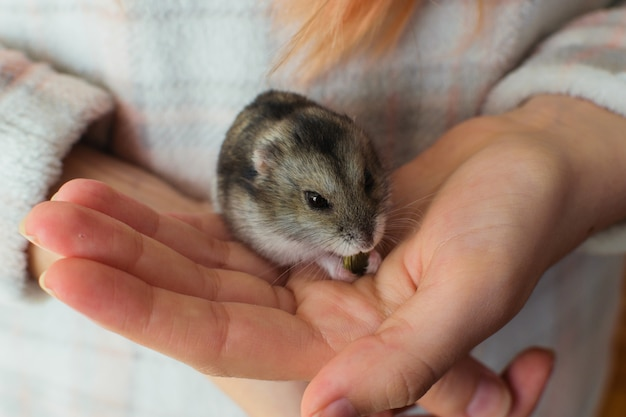 Cute hamster pet eating on a owner´s hand.