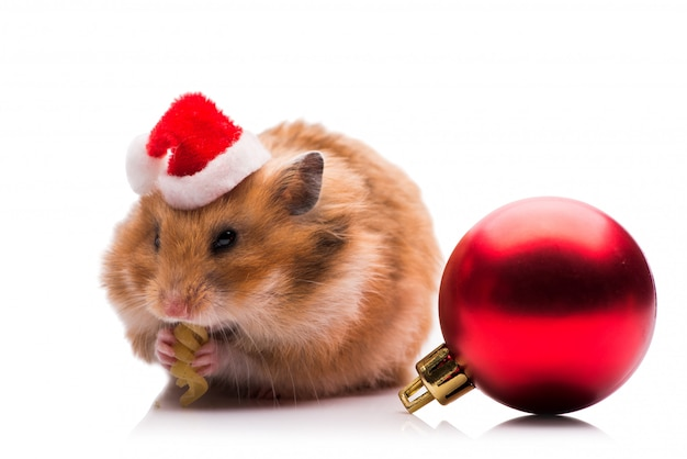 Cute hamster with santa hat isolated