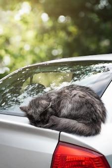 Cute happy gray cat sleeps on car
