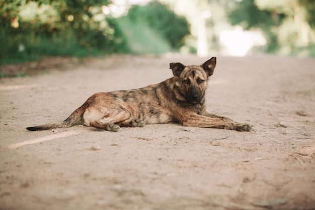 道路に横たわっているかわいいホームレス犬