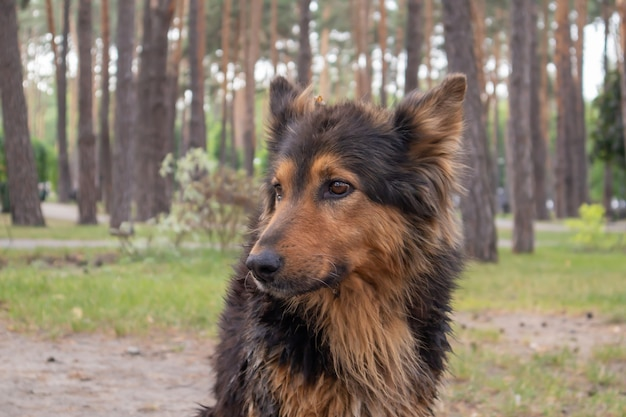 A cute homeless dog with cute eyes in a summer park. adoption concept. sad homeless dog posing in the park.