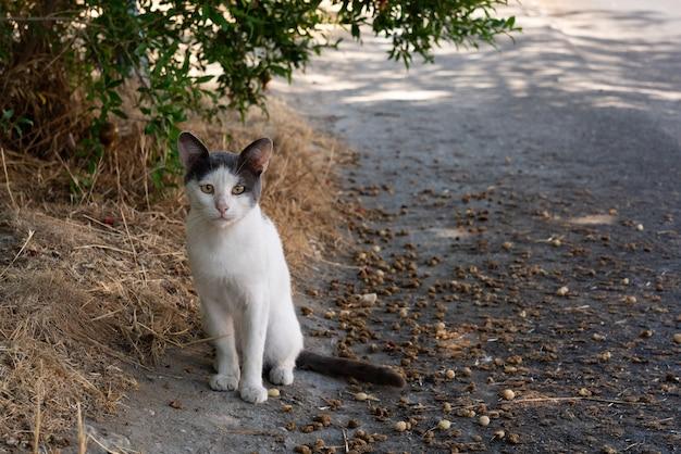 路上でかわいいホームレスの子猫