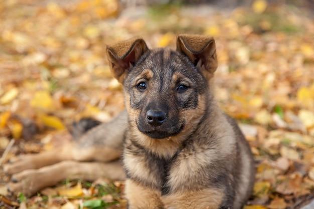 Милый бездомный щенок играет в желтых листьях