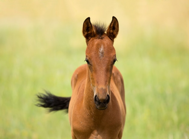 Cute horse foal in pasture