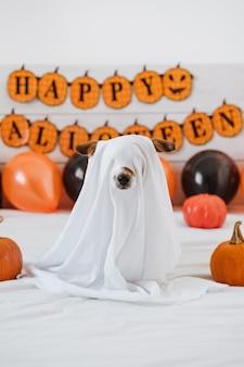 Милая собака джек рассел дома в костюме призрака. хэллоуин фон украшения