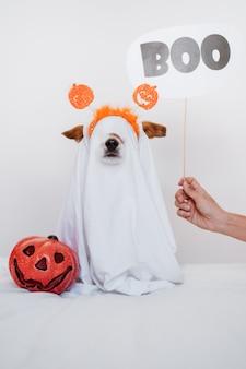幽霊の衣装で自宅でかわいいジャックラッセル犬。ハロウィーンの装飾。 booサインを持っている女性の手