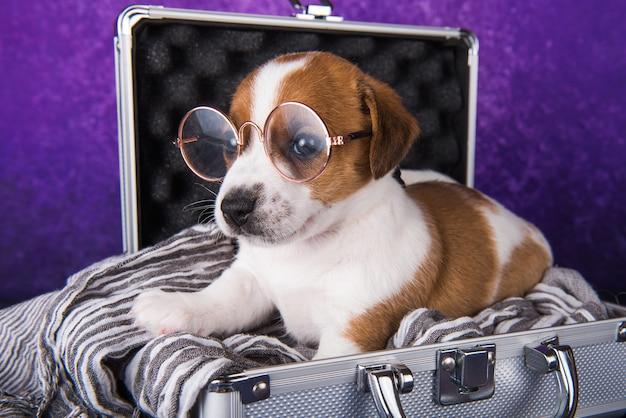 メガネをかけたかわいいジャックラッセルテリアの子犬犬は、旅行のためにスーツケースに座っています。休暇で私を連れて行ってください。
