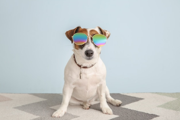 Cute jack russell terrier with stylish sunglasses on color background
