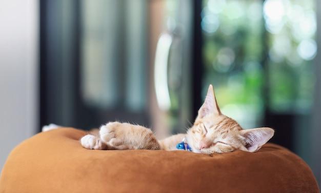 Милый котенок кошка спит на подушке дома фоне. концепция воспитания домашних животных и животных в доме, чтобы быть здоровыми и счастливыми.