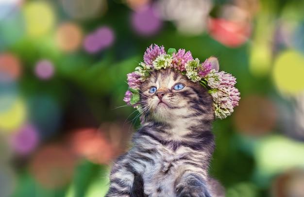 Милый котенок, увенчанный венком из клевера