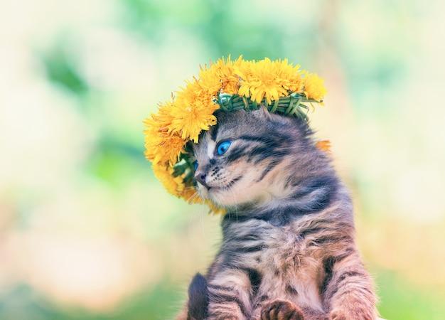 タンポポの花のビーズ状の物で戴冠したかわいい子猫