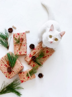 Cute kitten curious and playful around wrapped gifts and ornaments