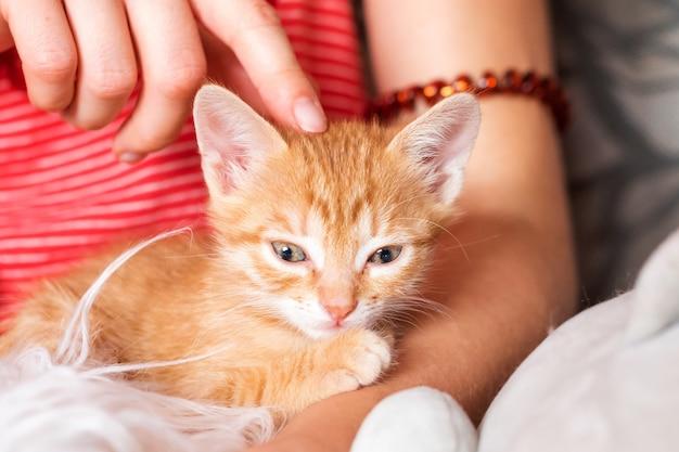 Милый котенок в женских руках владелица питомца и ее питомец милые животные рыжий котенок расслабляющий уютный сон