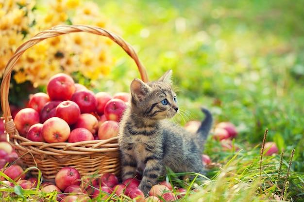 빨간 사과 바구니 근처 정원에 있는 귀여운 새끼 고양이