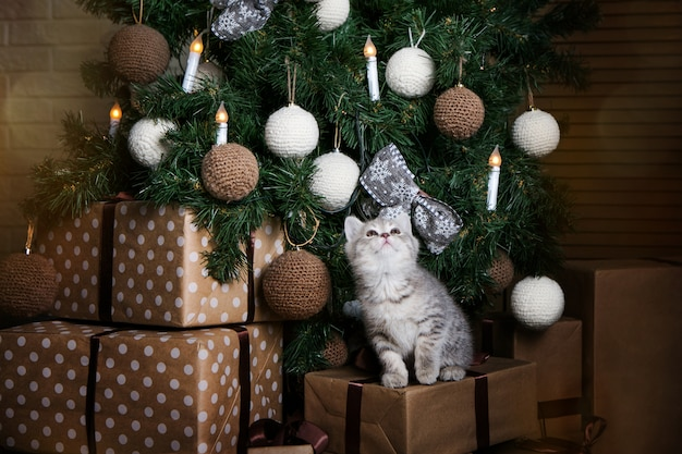Cute kitten is sitting on gifts under the christmas tree. charming pet. new year card.