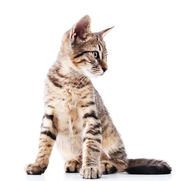 귀여운 새끼 고양이 흰색 절연
