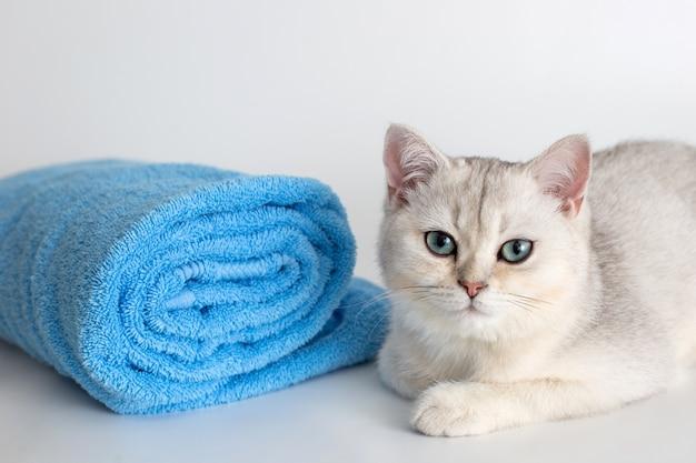 かわいい子猫は白い表面に青いタオルのロールで横たわっています
