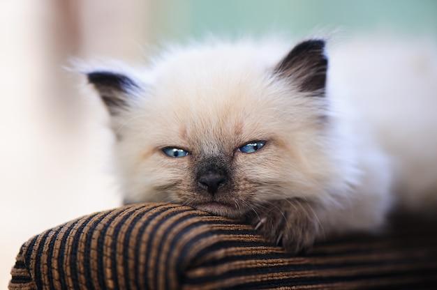 ソファに横になっているかわいい子猫。夏の庭で小さな赤ちゃん猫