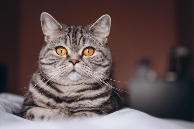 Симпатичный котенок на кровати