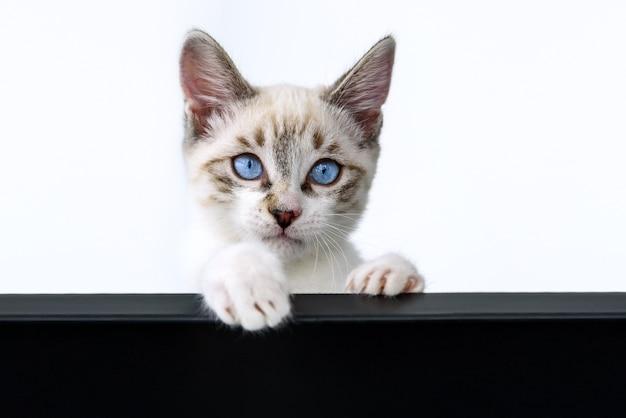 白でかわいい子猫
