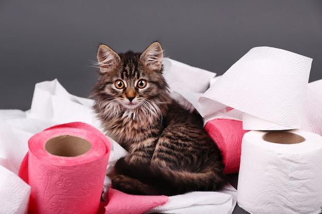 Милый котенок играет с рулоном туалетной бумаги