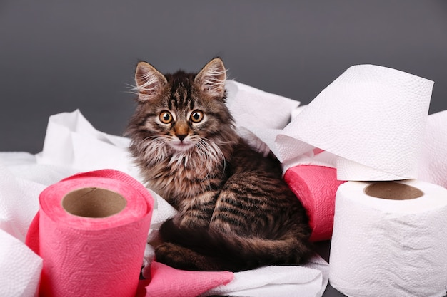 Cute kitten playing with roll of toilet paper