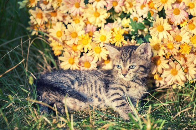 Милый котенок расслабляющий на открытом воздухе в цветах в саду