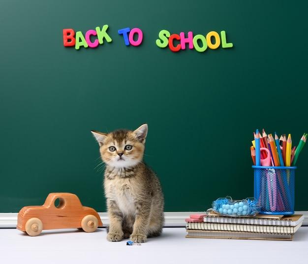 かわいい子猫スコットランドの黄金のチンチラまっすぐ座って、緑のチョークボードと文房具の背景、学校に戻る