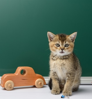 学校に戻って、緑のチョークボードの背景に黄色の本にまっすぐ座っているかわいい子猫スコットランドの黄金のチンチラ