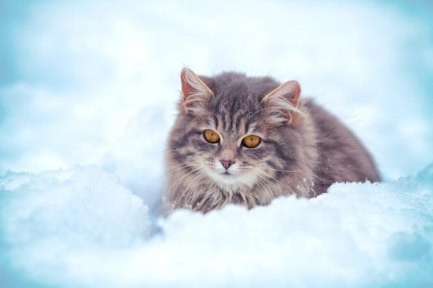 Милый котенок сидит в сугробе