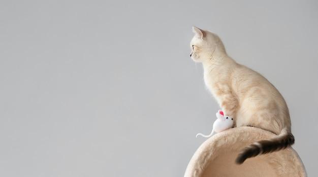 灰色の背景におもちゃのマウスと猫の塔の上に横に座っているかわいい子猫