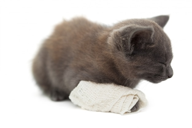 Cute kitten sleeping with a bandage on its paw