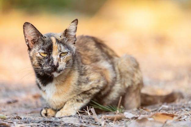 Cute kitten thailand in the garden grass under