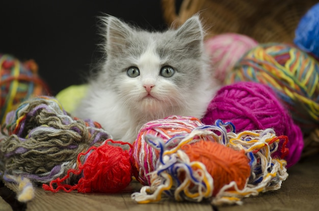 Cute kitten with ball of yarn on black background.