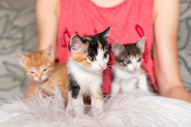 Милые котята в женских руках владелица домашних животных и ее домашние животные милые животные котенок расслабляющий уютный сон