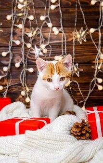 Милый котенок расслабляющий под праздничной елкой. котенок сидит на маленькой елке с огнями. белый кот играет с гирляндой и подарочной коробкой под елкой. зимние каникулы. с новым годом