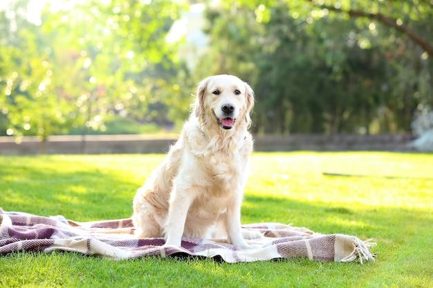 公園で休んでいるかわいいラブラドール犬