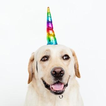 Cute labrador retriever with a unicorn cap