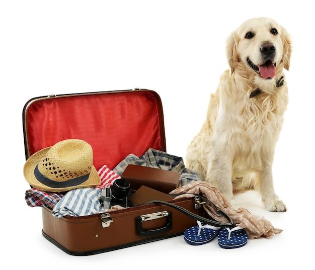 Милый лабрадор с чемоданом, изолированные на белом фоне