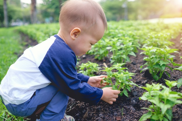 Cute little asian 18 months / 1 year old toddler baby boy child planting young tree on black soil in the green garden