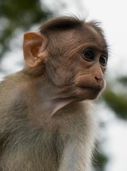 Милая маленькая обезьянка на природе