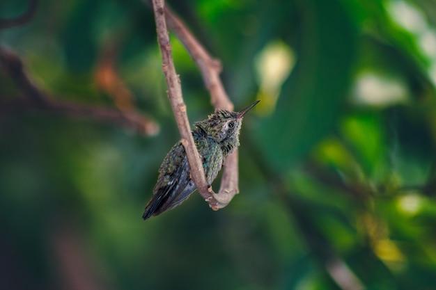 구부러진 나뭇가지에 서 있는 귀여운 작은 벌새