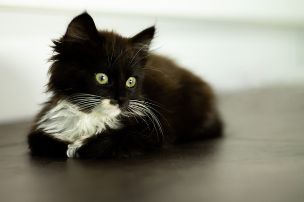 Cute little black kitten with white breast and paws and yellow eyes lying on a dark floor