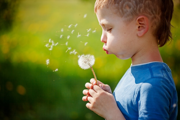 Cute little boy blowing dandelion in spring garden.