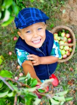 庭を手伝って、バスケットでリンゴを選ぶかわいい男の子